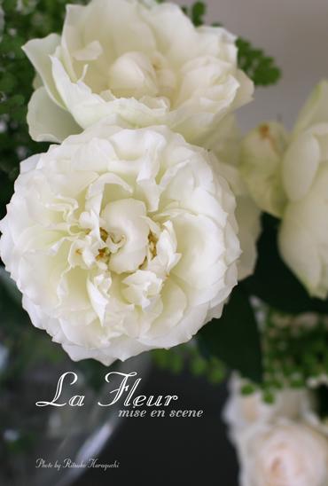white rose_f0127281_23564947.jpg