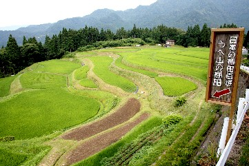 うへ山の棚田、夏は緑のカーペット (兵庫)_b0067283_137076.jpg