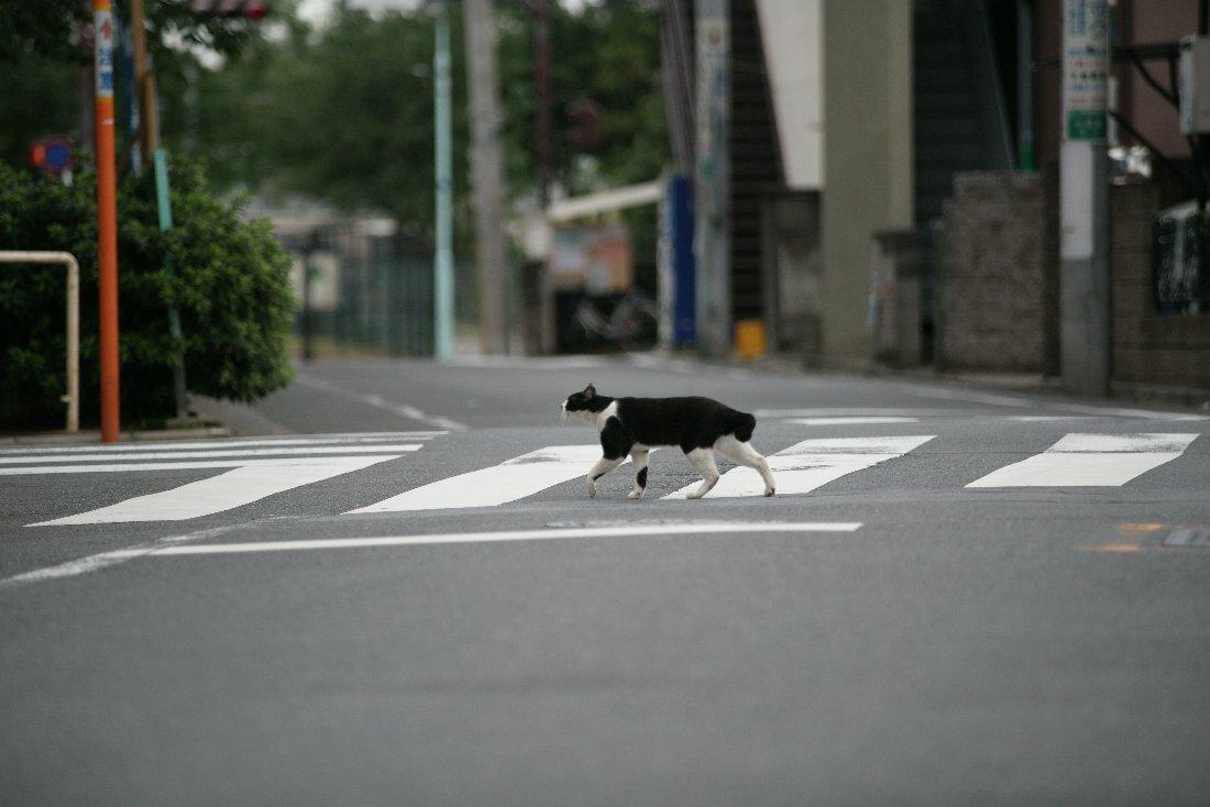 ご近所ネコ事情_c0124795_22381216.jpg