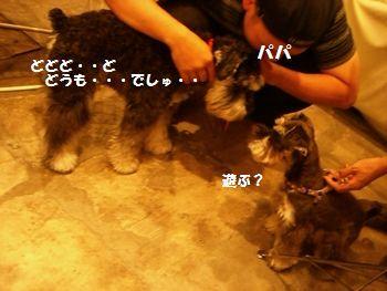 f0197317_6151143.jpg