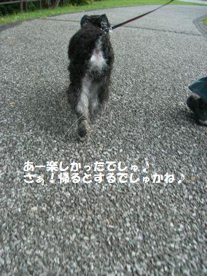 f0197317_635526.jpg