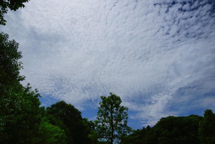 梅雨明けの日の空_e0077521_13294546.jpg