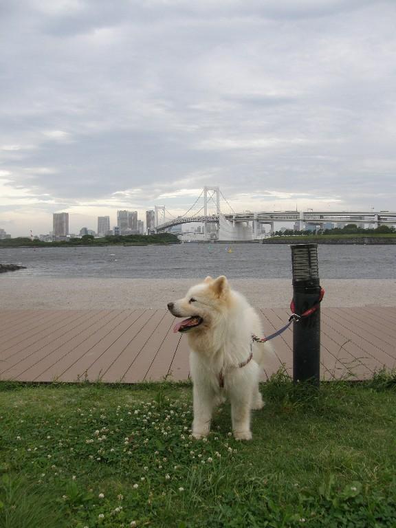 レオ 東京を後に 山中湖へ_f0128542_923491.jpg