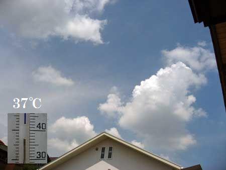 暑っ~~っっ                        No.658_d0103457_14323394.jpg