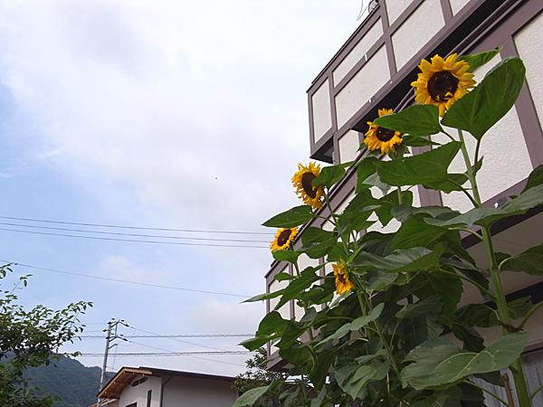 090714 夏間近_b0129659_8171421.jpg
