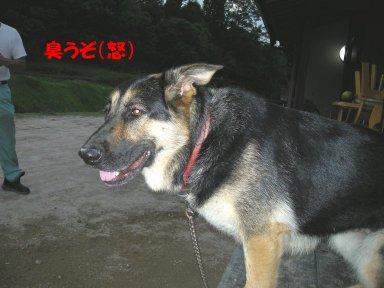 b0113663_8401241.jpg