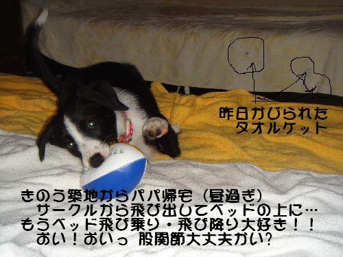 b0101991_655085.jpg