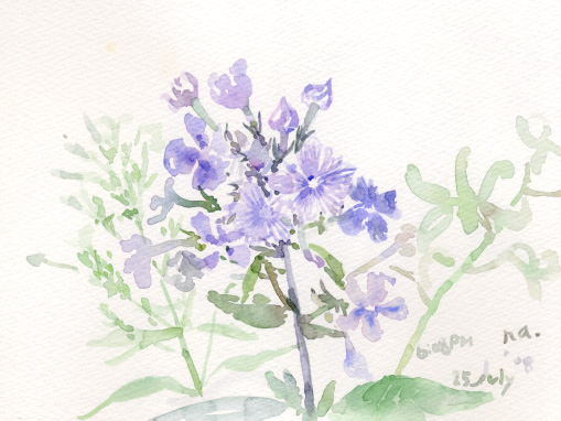 夏の花 2_d0115092_8171599.jpg