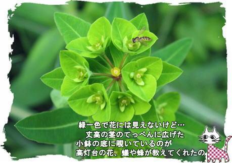 f0137096_22204649.jpg