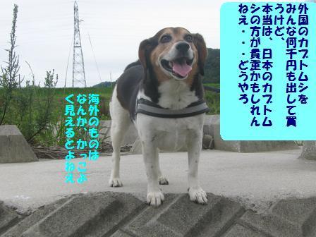 d0104209_2048964.jpg