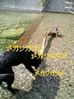 f0148927_19491192.jpg
