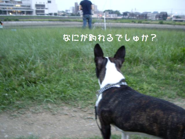 e0098547_22463251.jpg