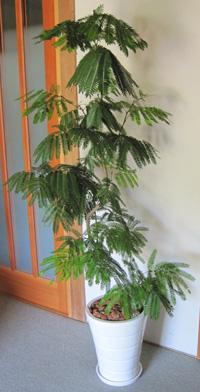 観葉植物を入荷しました!_a0118355_21241192.jpg