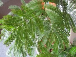 観葉植物を入荷しました!_a0118355_21324965.jpg