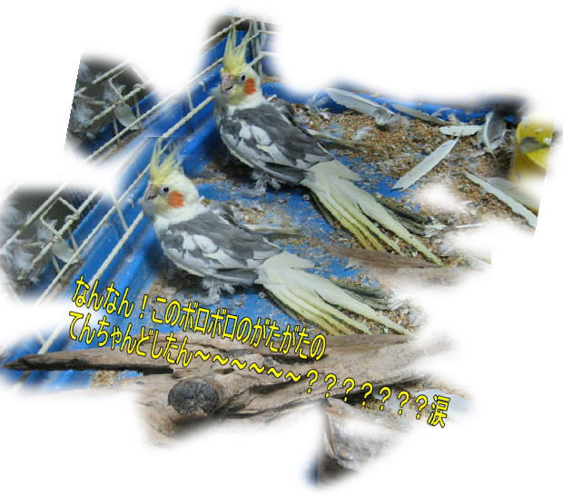 f0082367_14241191.jpg