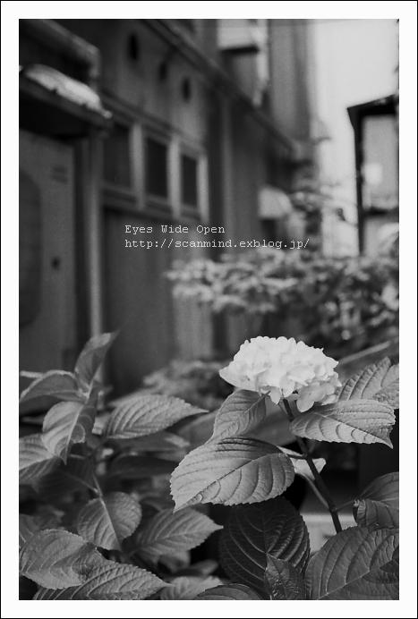 裏庭の妖精_c0170584_203356.jpg