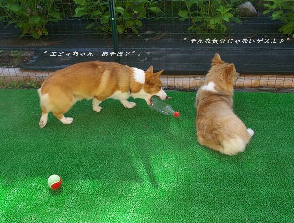 遊んでよ、エミィちゃ~ん! 7/20_c0127703_147216.jpg