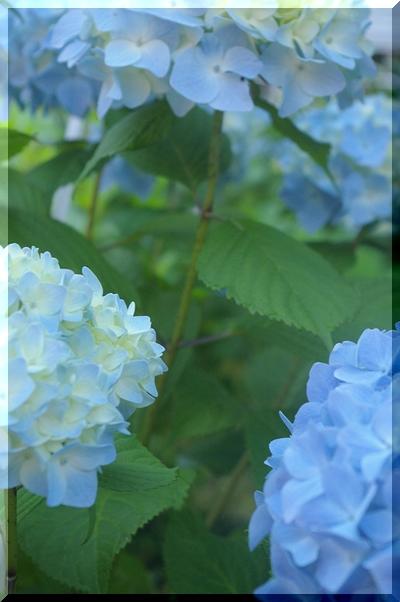 夏のお嬢さん♪   7/16_c0127703_2201057.jpg