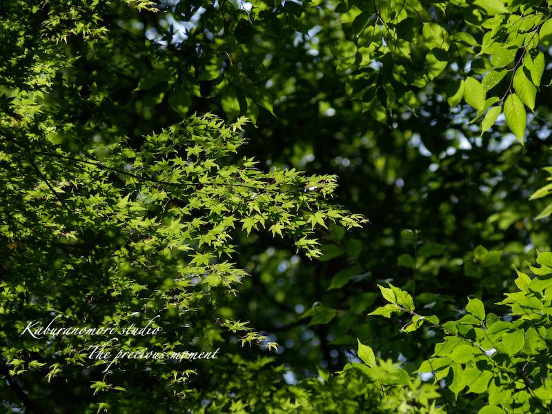 09/7/14 >>    まだまだ続く、山中草刈り_c0137403_1004868.jpg