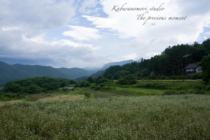 09/7/14 >>    まだまだ続く、山中草刈り_c0137403_1011029.jpg