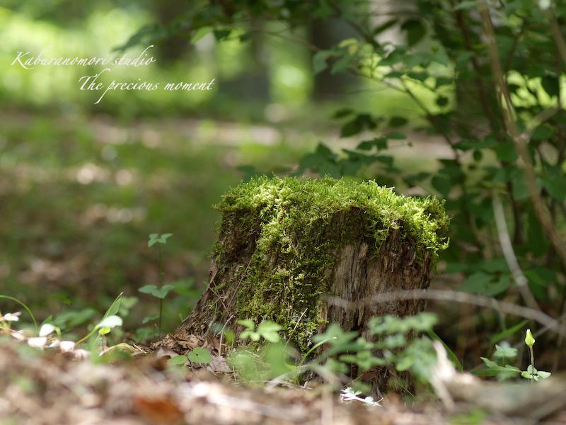 09/7/14 >>    まだまだ続く、山中草刈り_c0137403_9583791.jpg