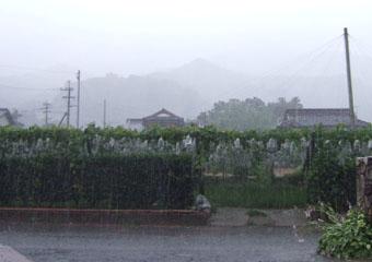 梅雨ですから。_b0168320_1404692.jpg