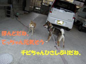 f0143123_211048.jpg