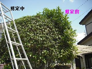 f0031037_20104777.jpg