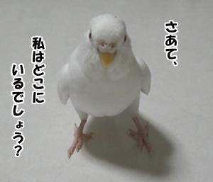 c0066157_15523640.jpg