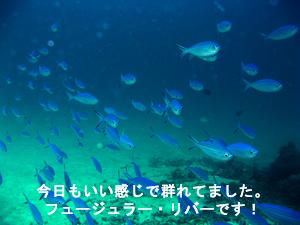 船酔い王子と行くラチャヤイ島_f0144385_18215733.jpg