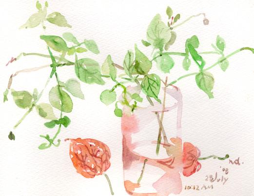 夏の花 4_d0115092_8254499.jpg