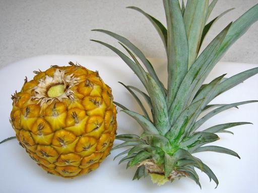 収穫して冷やしておいたパイナップルのクラウンを取る