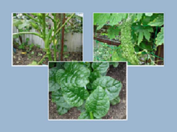 夏のスタミナ野菜_f0204295_17263230.jpg