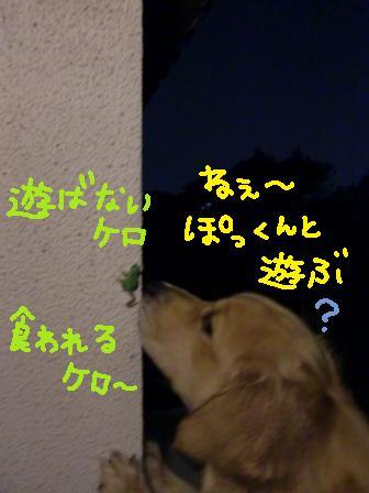 f0176830_21372195.jpg