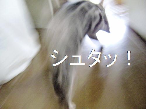 f0175434_1841337.jpg