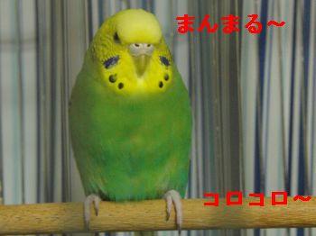 f0196665_23355663.jpg