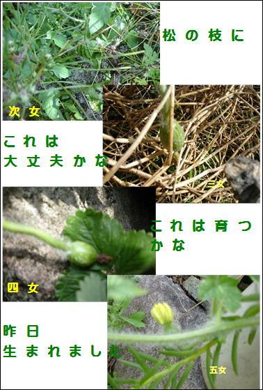 f0003174_10534487.jpg