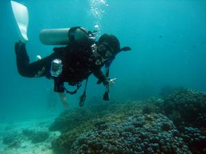 今日から潜り詰め! スタートはラチャヤイ島から!!_f0144385_2040015.jpg