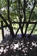 樹上の特等席。_d0028589_21423443.jpg