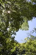樹上の特等席。_d0028589_21424731.jpg
