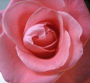 花を飾ること_e0169493_20521921.jpg