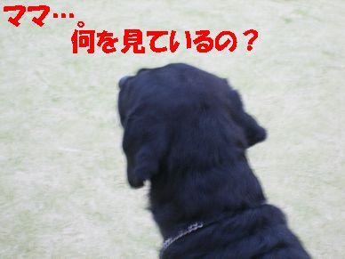 a0137294_237491.jpg