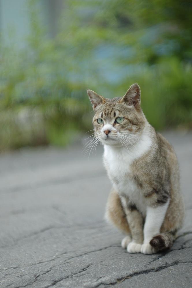 夕張、本町の猫3_f0042194_2311953.jpg