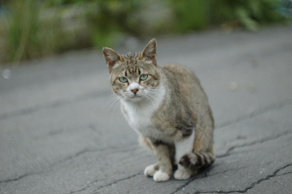 夕張、本町の猫2_f0042194_263561.jpg