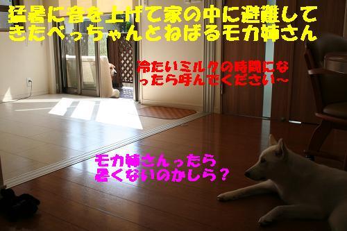 f0121712_15311.jpg