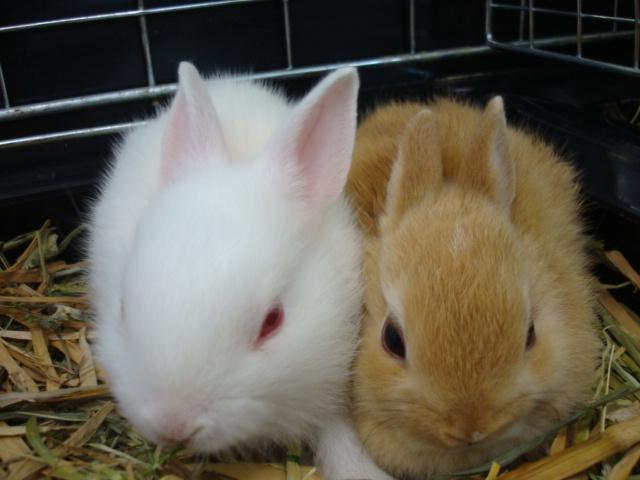 ウサギ・ハムスター・カメ・昆虫_f0189122_11403175.jpg