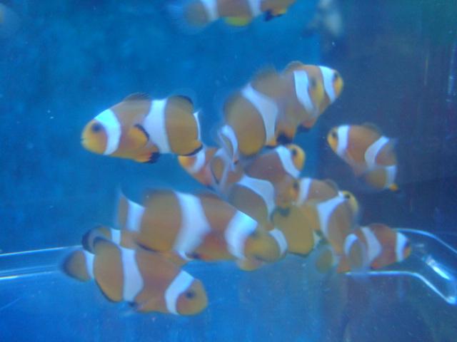 海水魚_f0189122_1212491.jpg