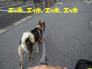 f0143123_20103189.jpg