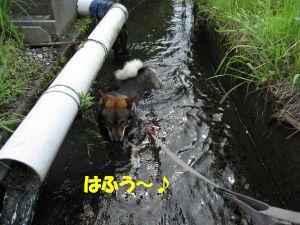 f0143123_20123972.jpg