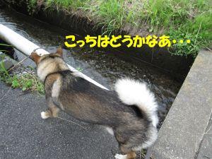f0143123_2012816.jpg